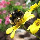 Bumble-bee at work by Hans Bax