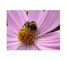 Bumble-bee in action Art Print