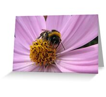 Bumble-bee in action Greeting Card