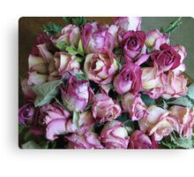 Old Pink Canvas Print