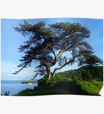 A Lone Tree in Lews Castle Grounds Poster