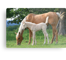 Broodmare and her young foal Metal Print