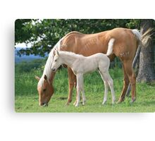 Broodmare and her young foal Canvas Print
