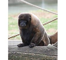 Beautiful Woolly Monkey