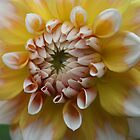 Yellow and White Dahlia by Karen Kaleta