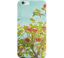 Pink Camellia japonica Blossoms and Sun in Blue Sky iPhone Case/Skin