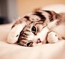 cat by radgipp
