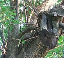 Oddly shaped tree by Karen  Chandler
