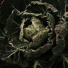 Cabbage by zaliedal