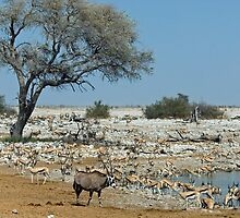 Rush hour at the waterhole by imperfecteye