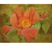 Rustic Russet Photographic Print