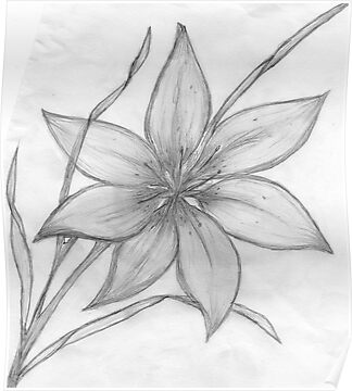 Lily Flower Drawings In PencilLily Flower Drawings In Pencil