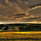 Lightning field by costy33