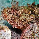Danger Close (Scorpion Fish) by Greg Amptman