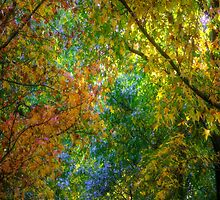 PhilipJohnson Photography Scarves # 3 - Autumn by Philip Johnson
