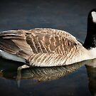 Canada Goose by Verbal72
