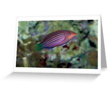 Funky Wrasse Greeting Card