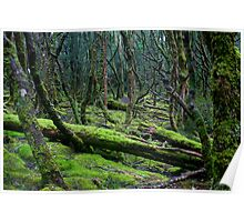 The Mossy Forest Poster