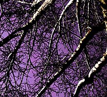 Ominous Tree branches by CSDesigns
