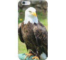 American Bald Eagle on a Perch iPhone Case/Skin