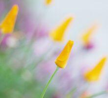 Springtime Wonder by Susan Gary