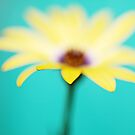 Yellow African Daisy on Brilliant Green by Susan Gary