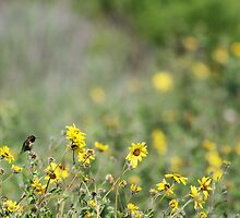 Hummingbird and California Wild Sunflowers by Susan Gary