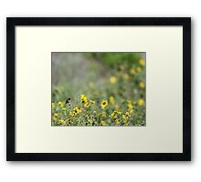 Hummingbird and California Wild Sunflowers Framed Print