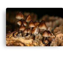 Funny Little Fungi Canvas Print