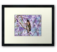 Hummingbird Visits the Jacaranda Framed Print