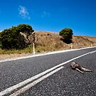 Road kill by Alexander Meysztowicz-Howen