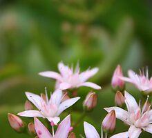 Delicate Beauty by JanelleSilver