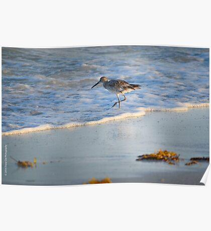 Sandpiper In Surf Poster