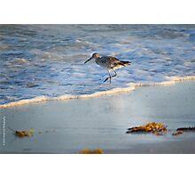 Sandpiper In Surf Photographic Print