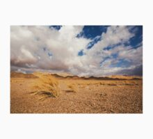 Dead dry grass in the Aravah Desert, Israel by PhotoStock-Isra
