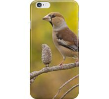 Hawfinch bird perched on a branch iPhone Case/Skin