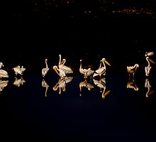 A flock of pelicans at night  by PhotoStock-Isra