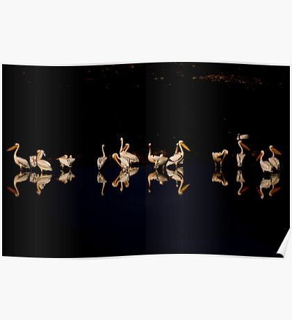 A flock of pelicans at night  Poster