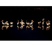 A flock of pelicans at night  Photographic Print