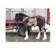 The shire horse foal Art Print