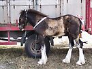 The shire horse foal by LoneAngel