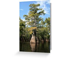 Cypress Beauty Greeting Card