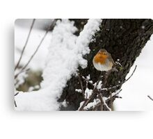 European Robin (Erithacus rubecula) perched on a branch in the snow Canvas Print