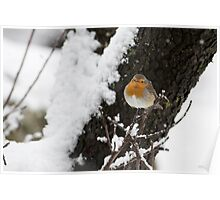 European Robin (Erithacus rubecula) perched on a branch in the snow Poster