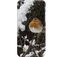 European Robin (Erithacus rubecula) perched on a branch in the snow iPhone Case/Skin