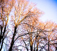 Autumn trees by Nicole a Alley
