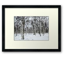 Lapland, Scandinavia, snow covered trees in a forest Framed Print