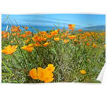 Coastal Poppies Poster