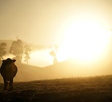 "Australia: ""The Golden Calf"", Victoria by Kelly Sutherland"