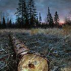 The Fallen One by Heather  Waller-Rivet  IPA